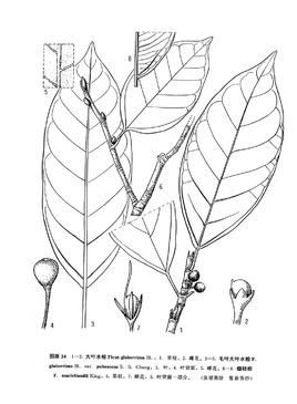 园林白水石榕手绘立面图线稿