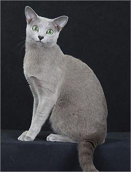 词条标签:猫猫属猫科生物脊索动物门自然