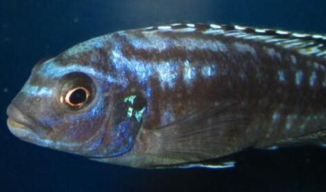 动物 鱼 鱼类 470