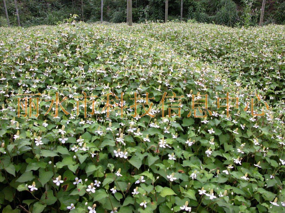 壁纸 成片种植 风景 植物