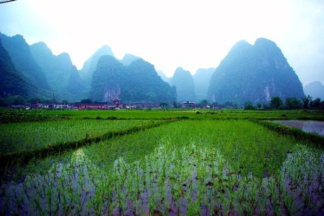 南京钟山风景区冬季图